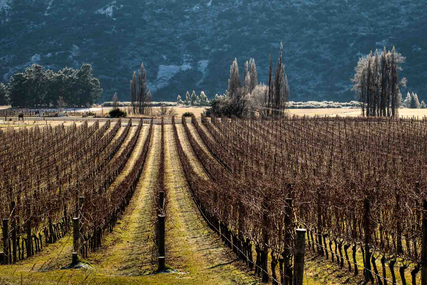 Resultado de imagen de central otago wine region new zealand