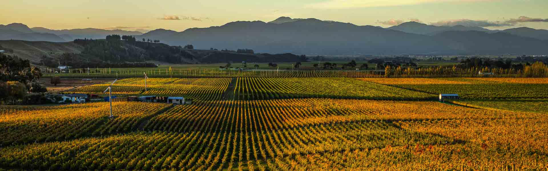 Marlborough Wine Region New Zealand