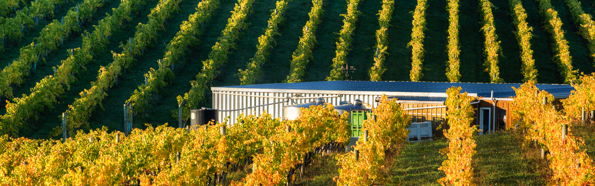 Rimu Grove Vineyard, Nelson